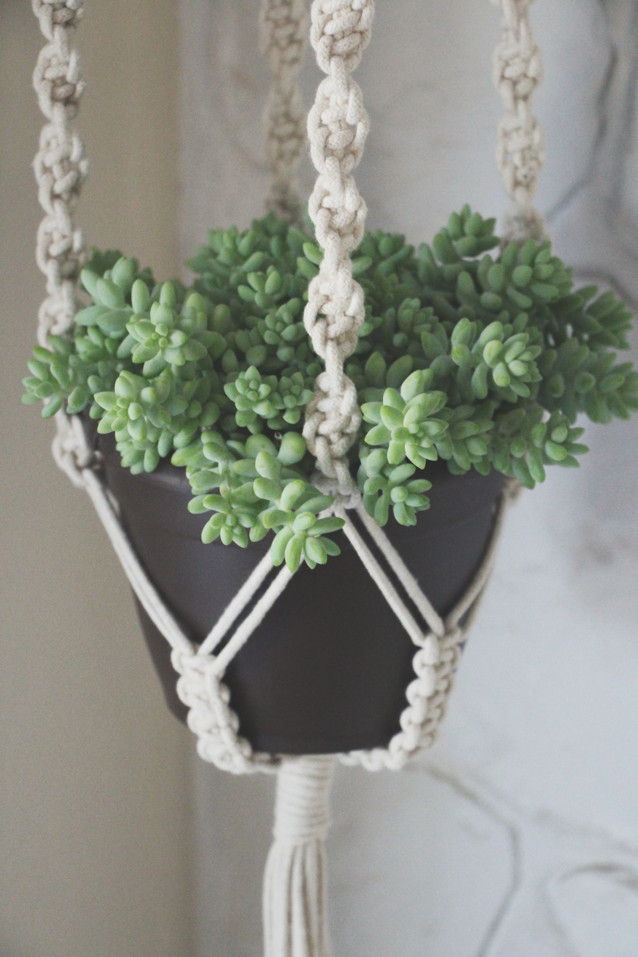 macrame plant hanger and succulent