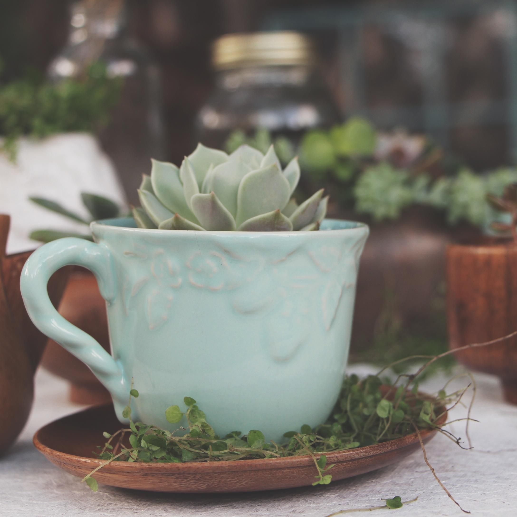 A Succulent Tea Party