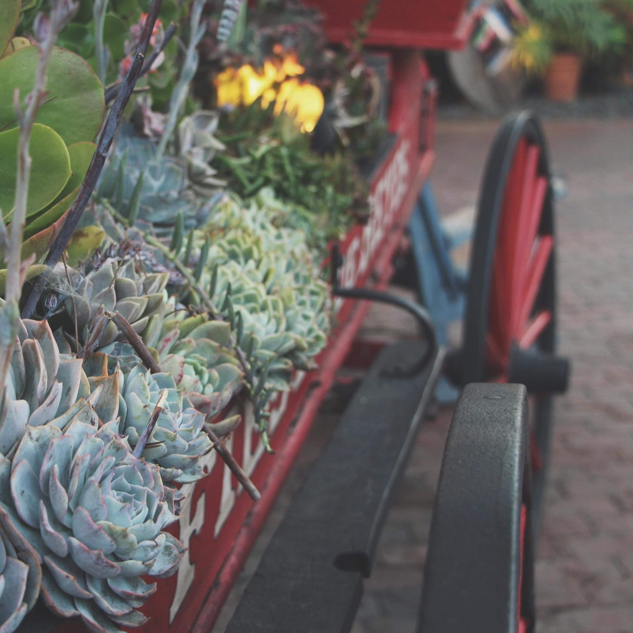 Succulent Sighting: Old Town