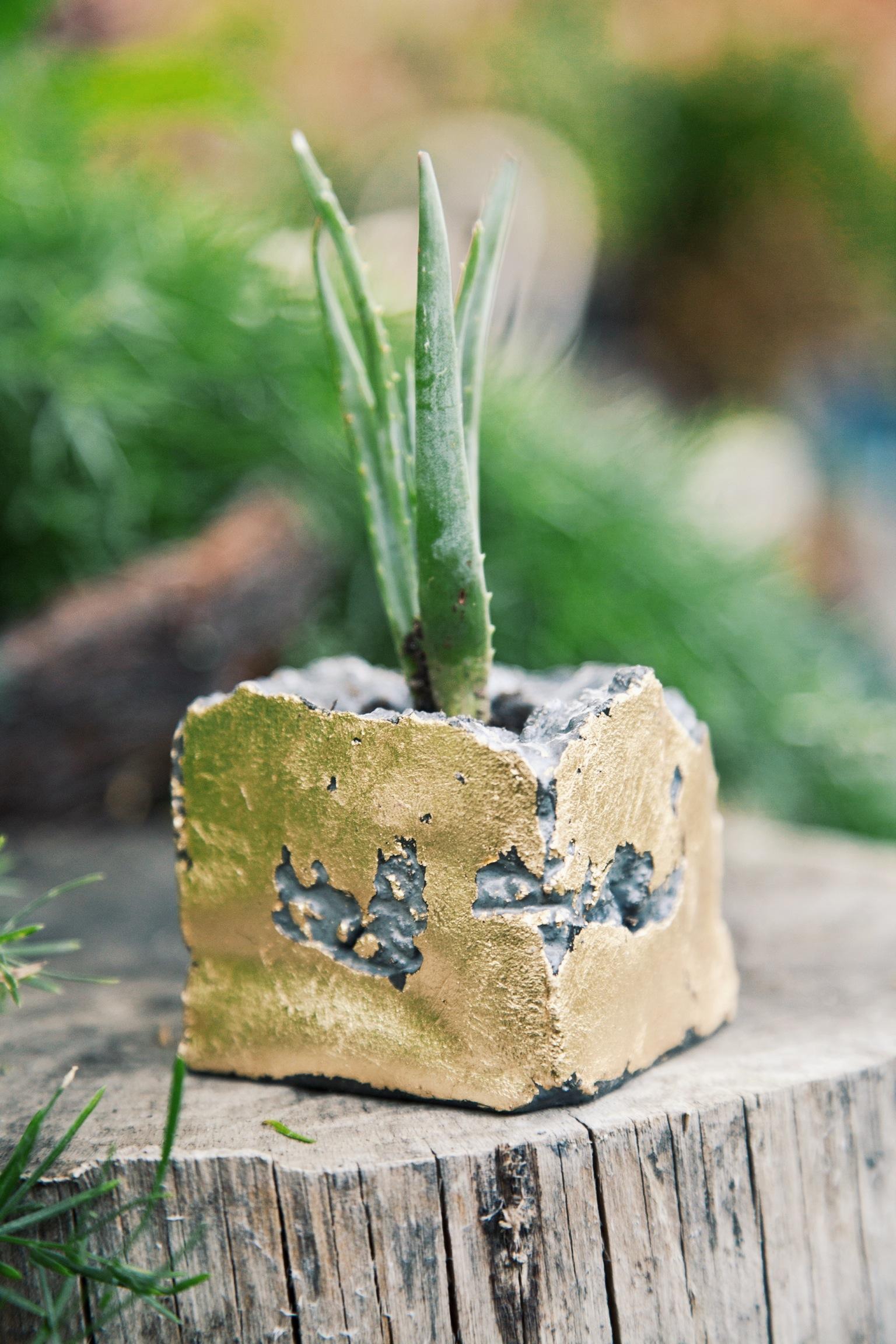 Concrete Geometric Succulent Planters via Needles + Leaves :: Giveaway