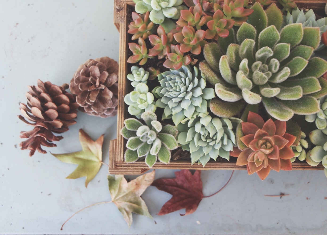 how-to-arrange-succulents-fall-needles-and-leaves-needlesandleaves_net.jpg
