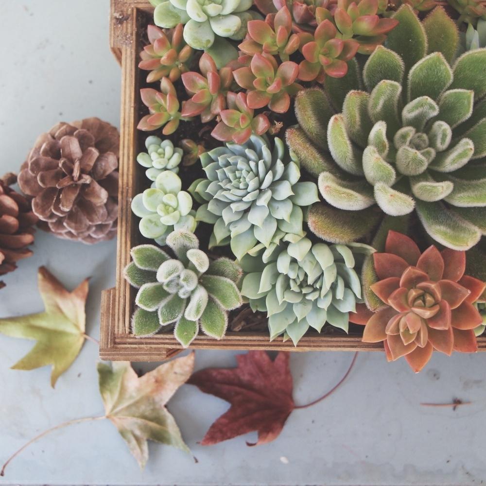 How to Arrange Succulents