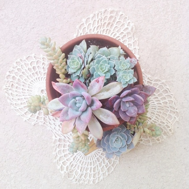 succulent-style-with-jaime-marie-hill-needlesandleaves_net.jpg