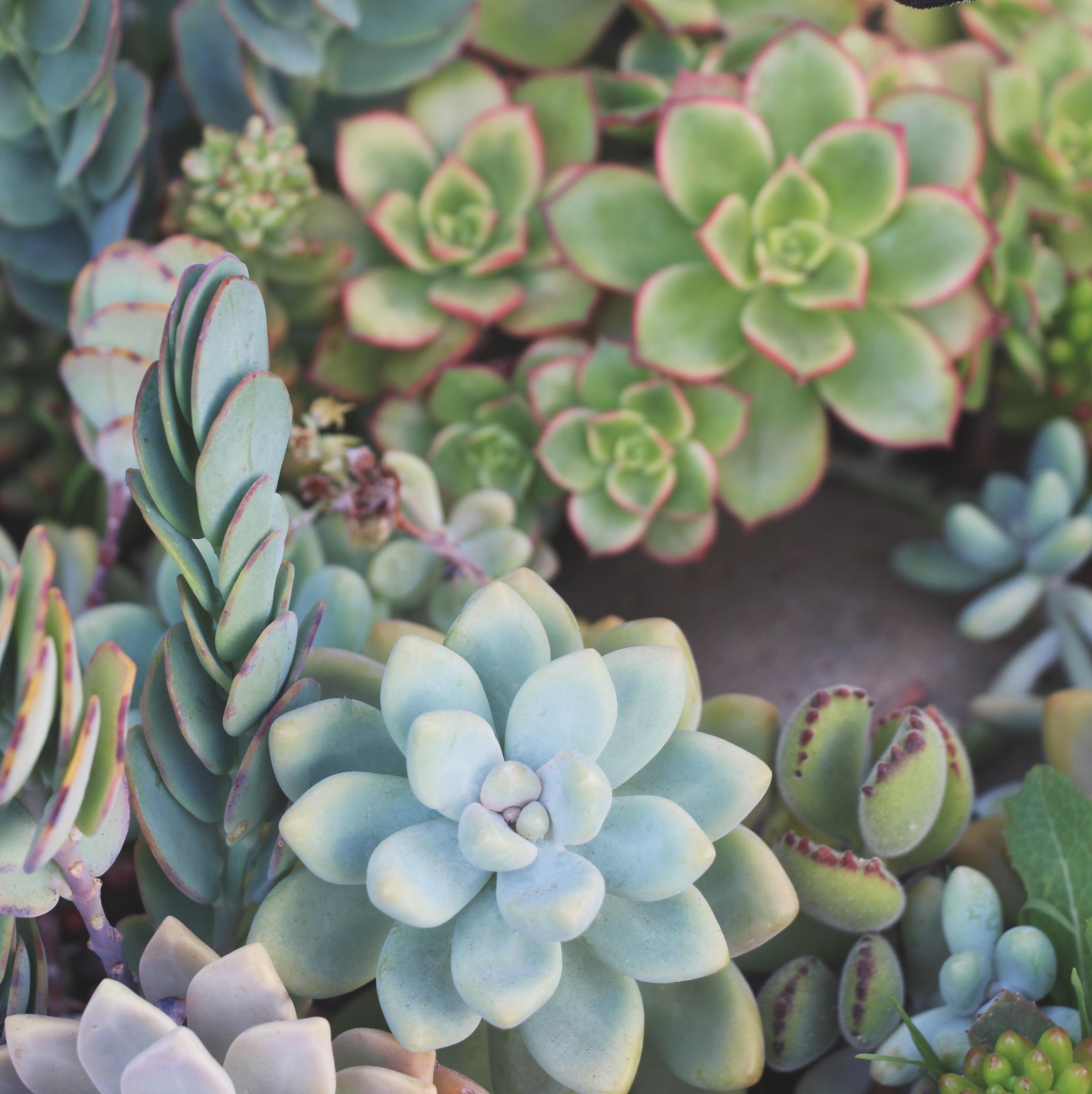 Seaside Succulents: A Garden Tour