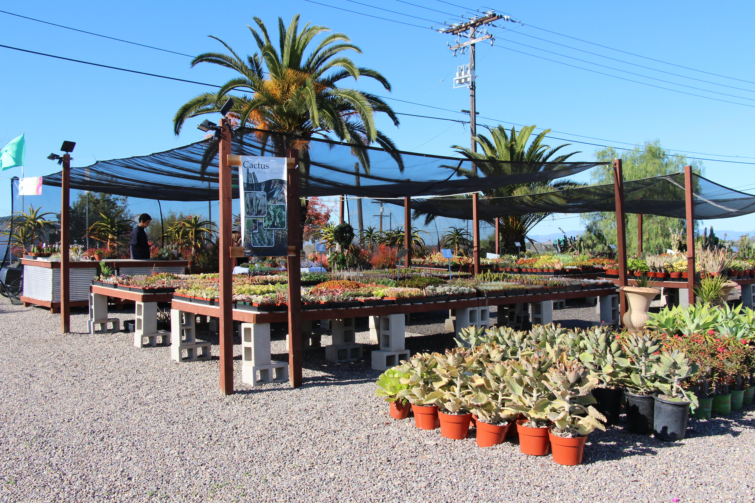 Rancho Vista Nursery in Vista, CA Quality Cactus and Succulents Farm Stand