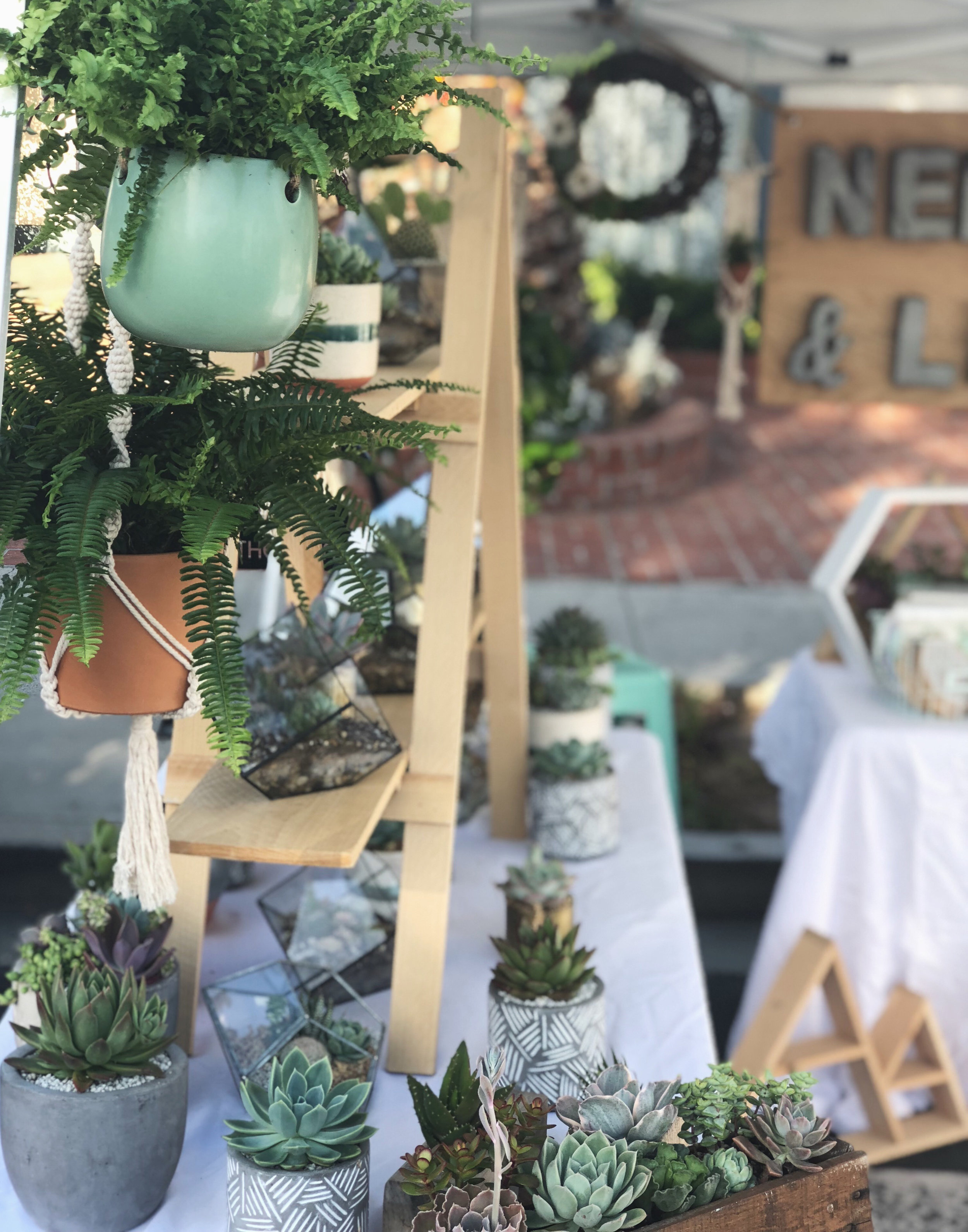 Needles + Leaves succulent booth at the Carlsbad Street Faire Spring 2018