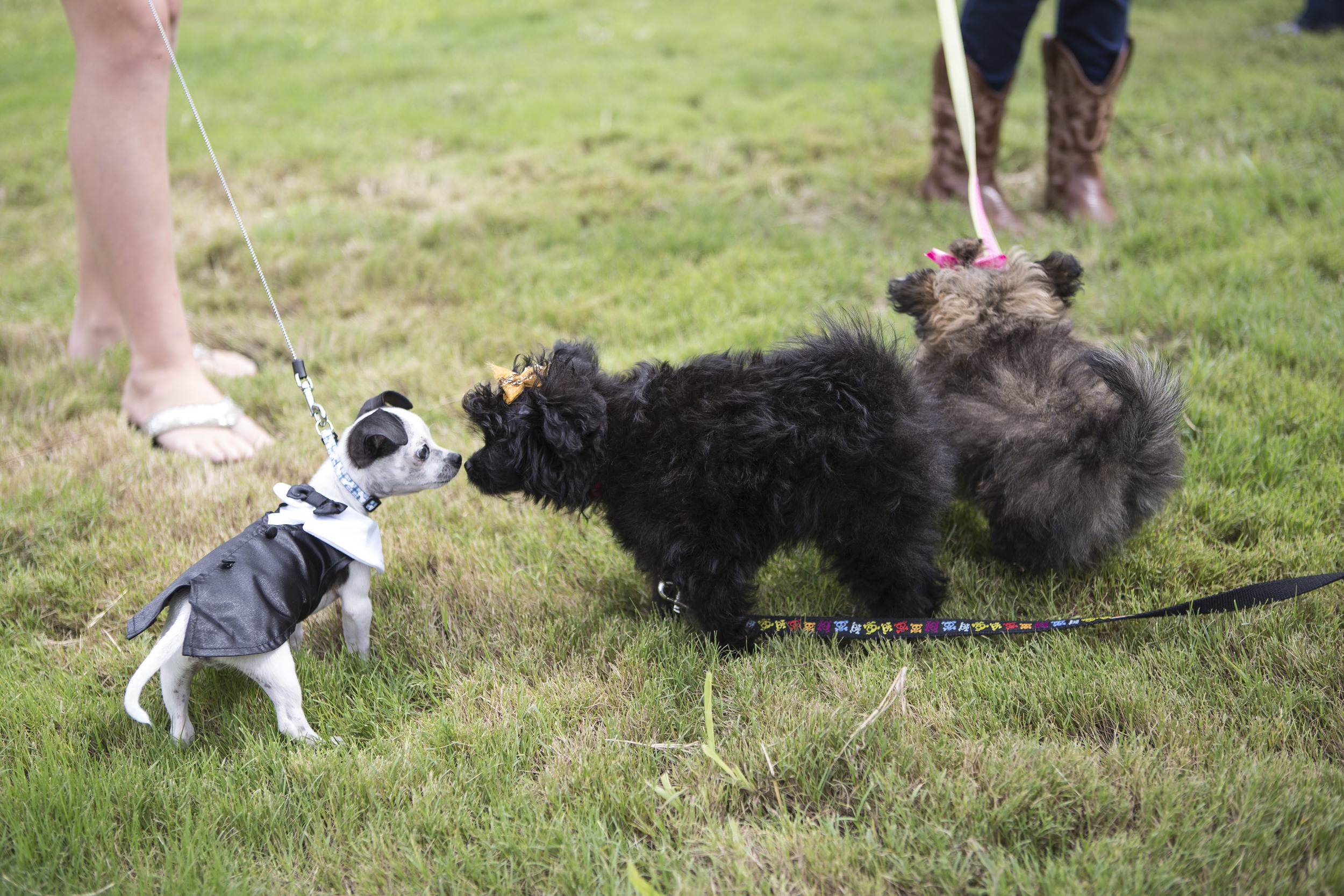 Blessing of Pets-3.jpg