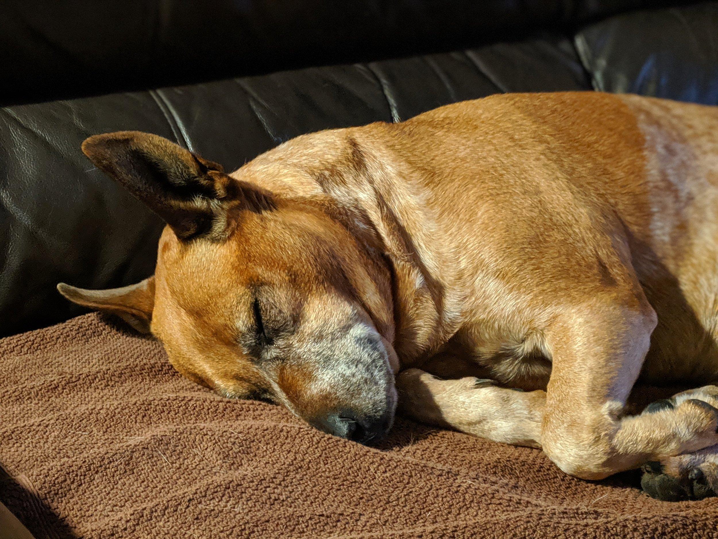 Fast asleep on the sofa.
