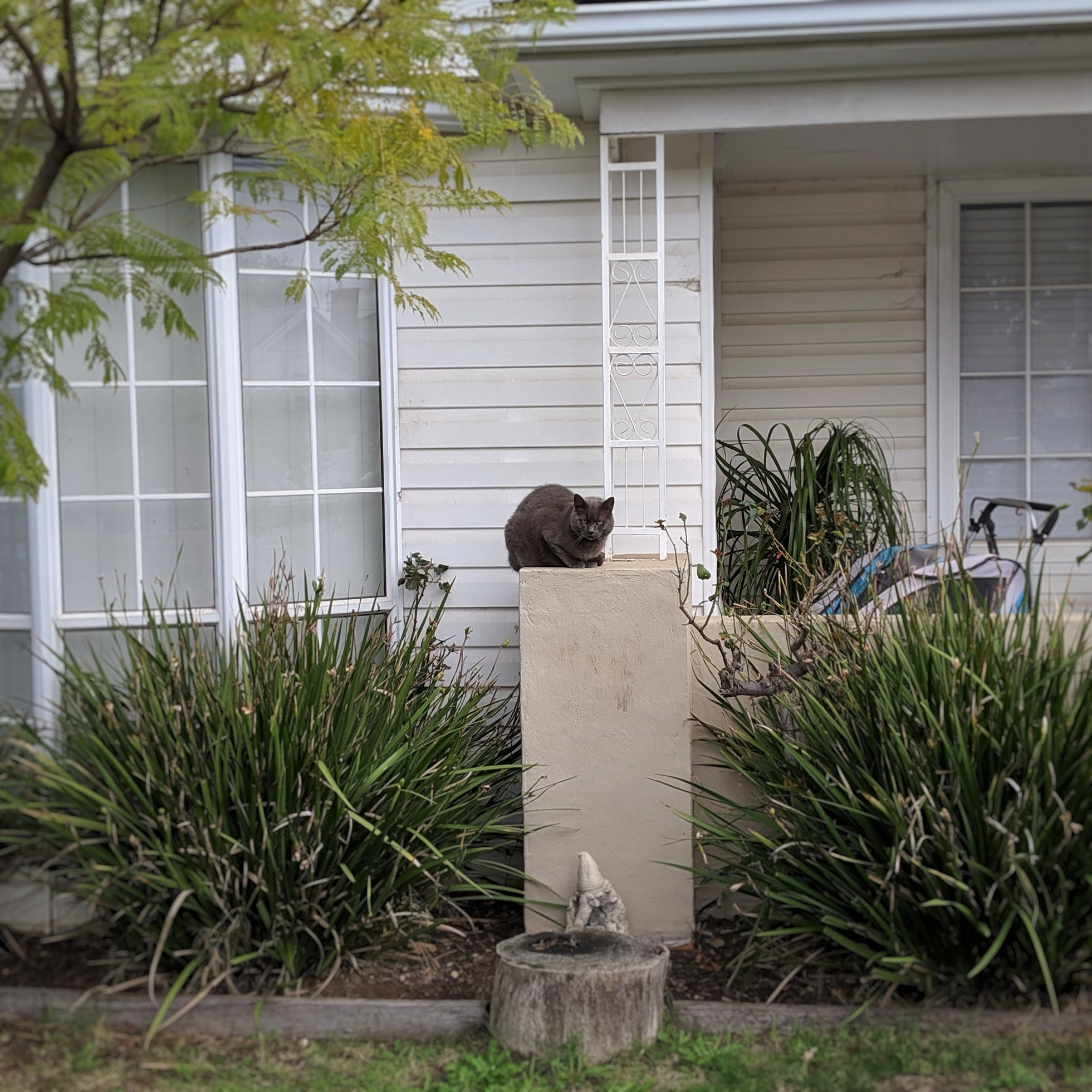 Disapproving cat-on-a-post is disapproving.