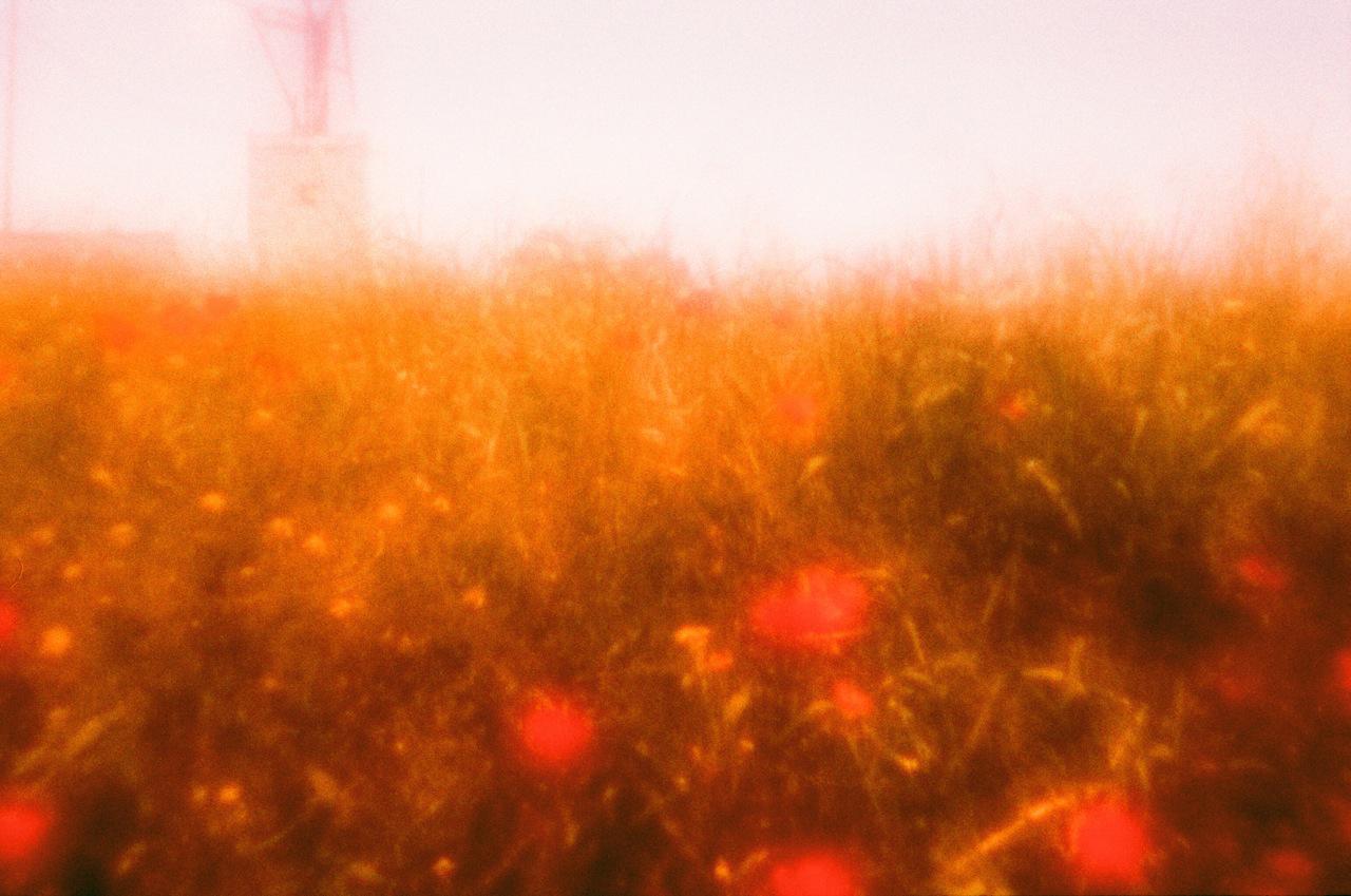 Ibiza poppies