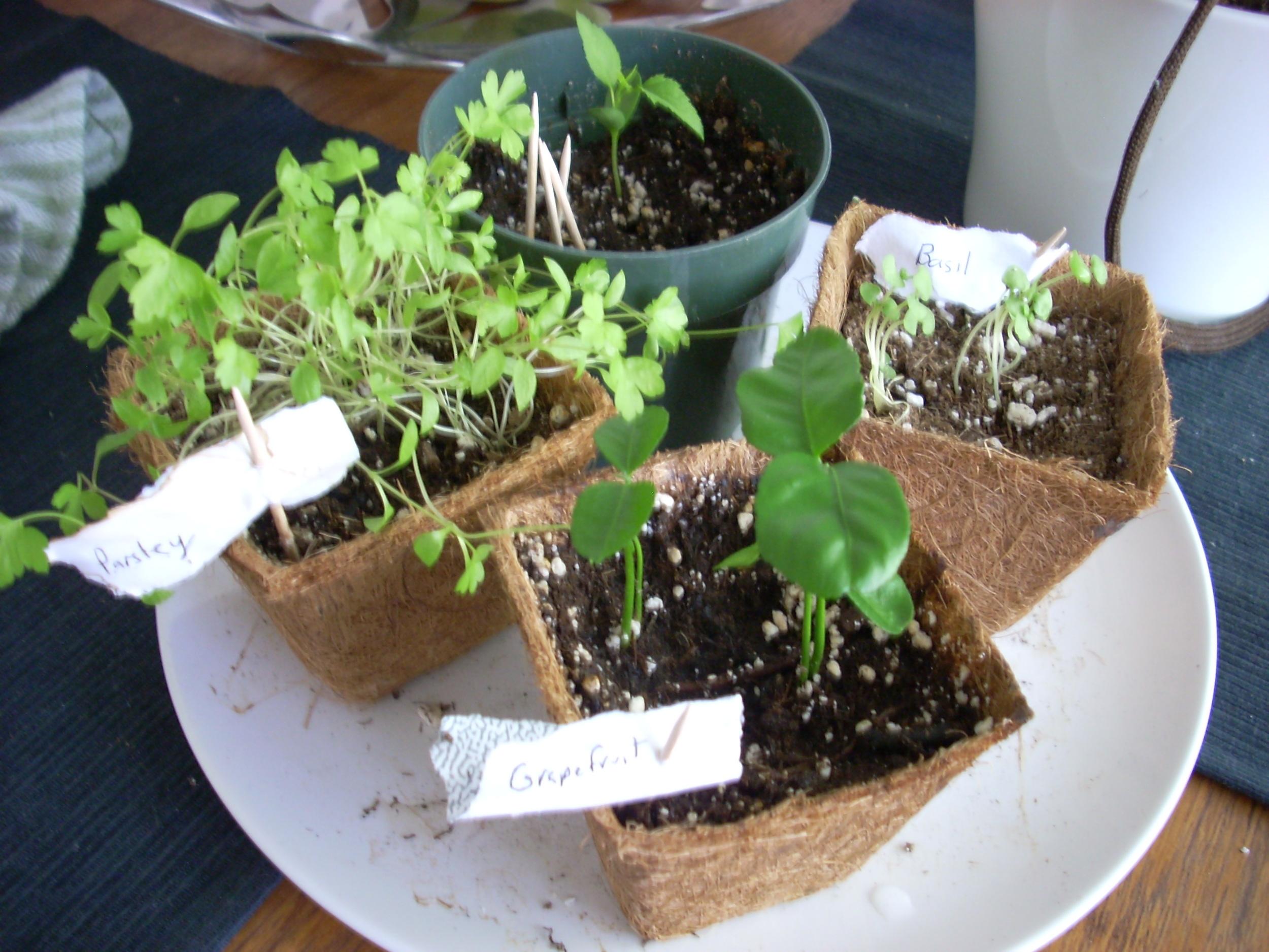 My First Seedlings