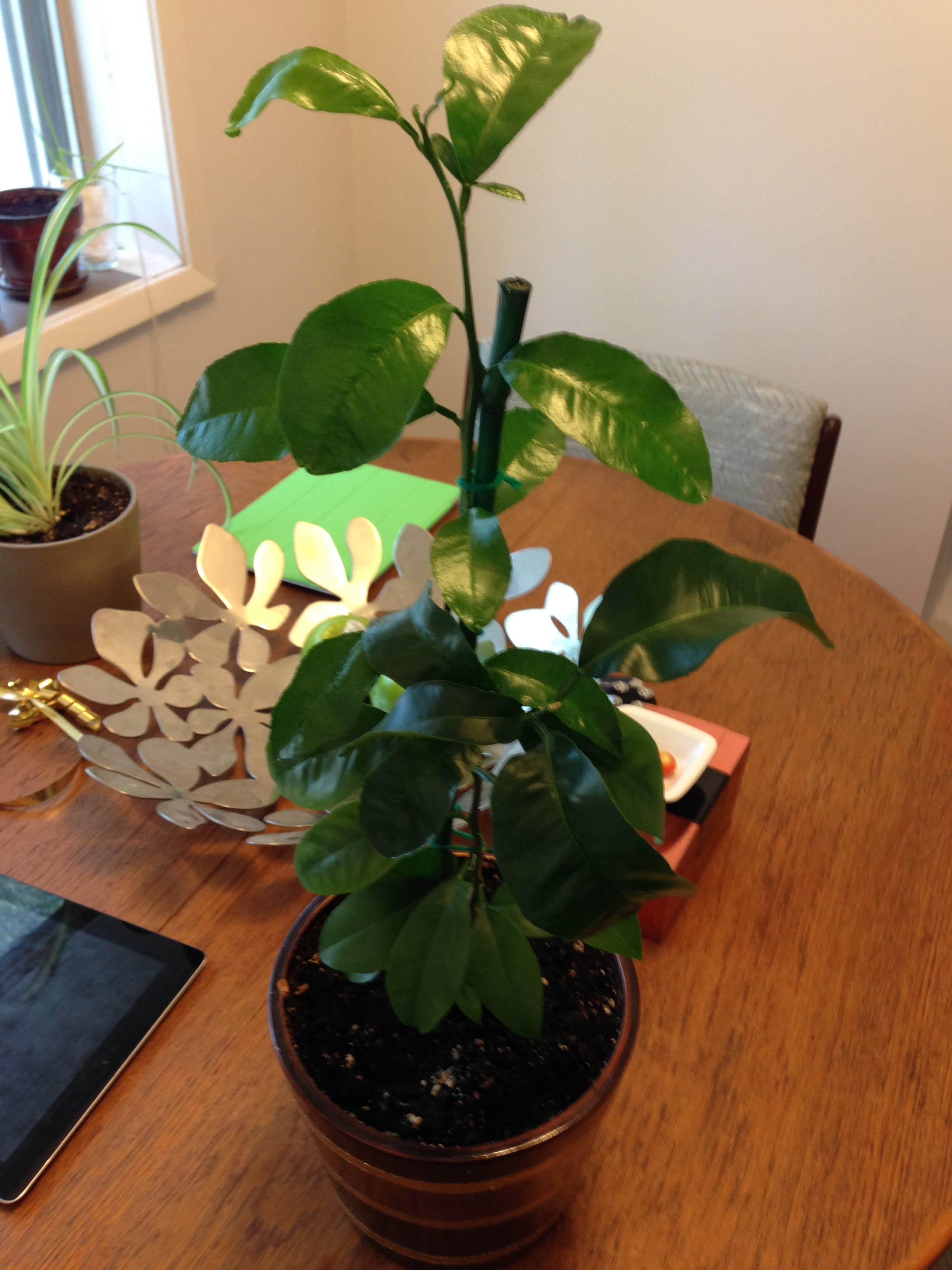 The Orange Plant