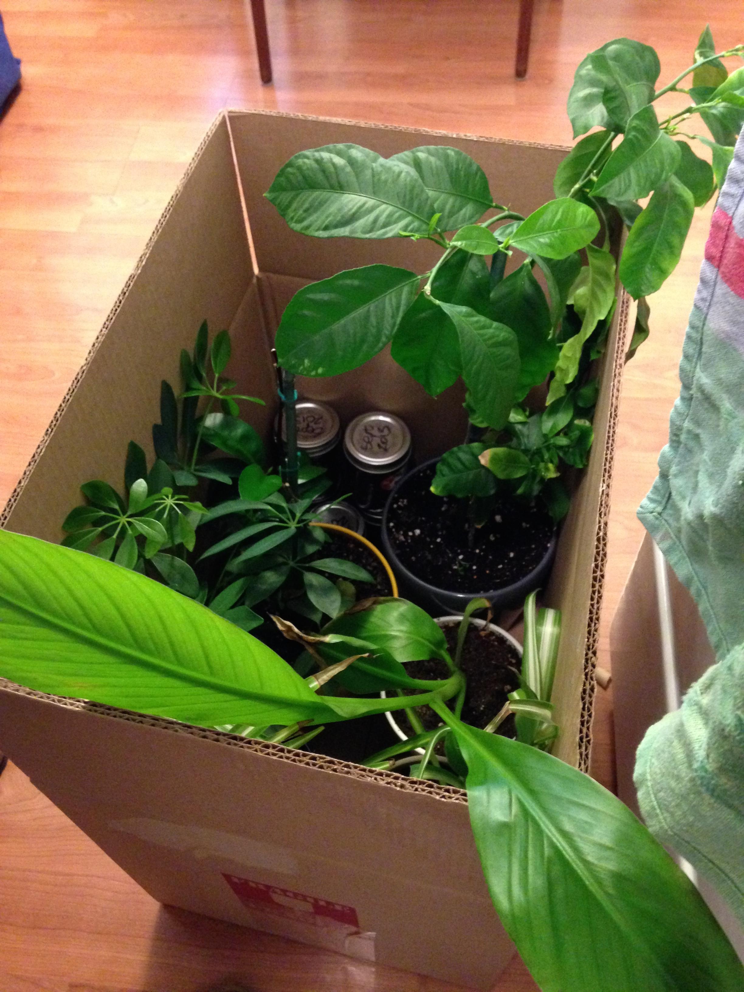 Bye bye plants!