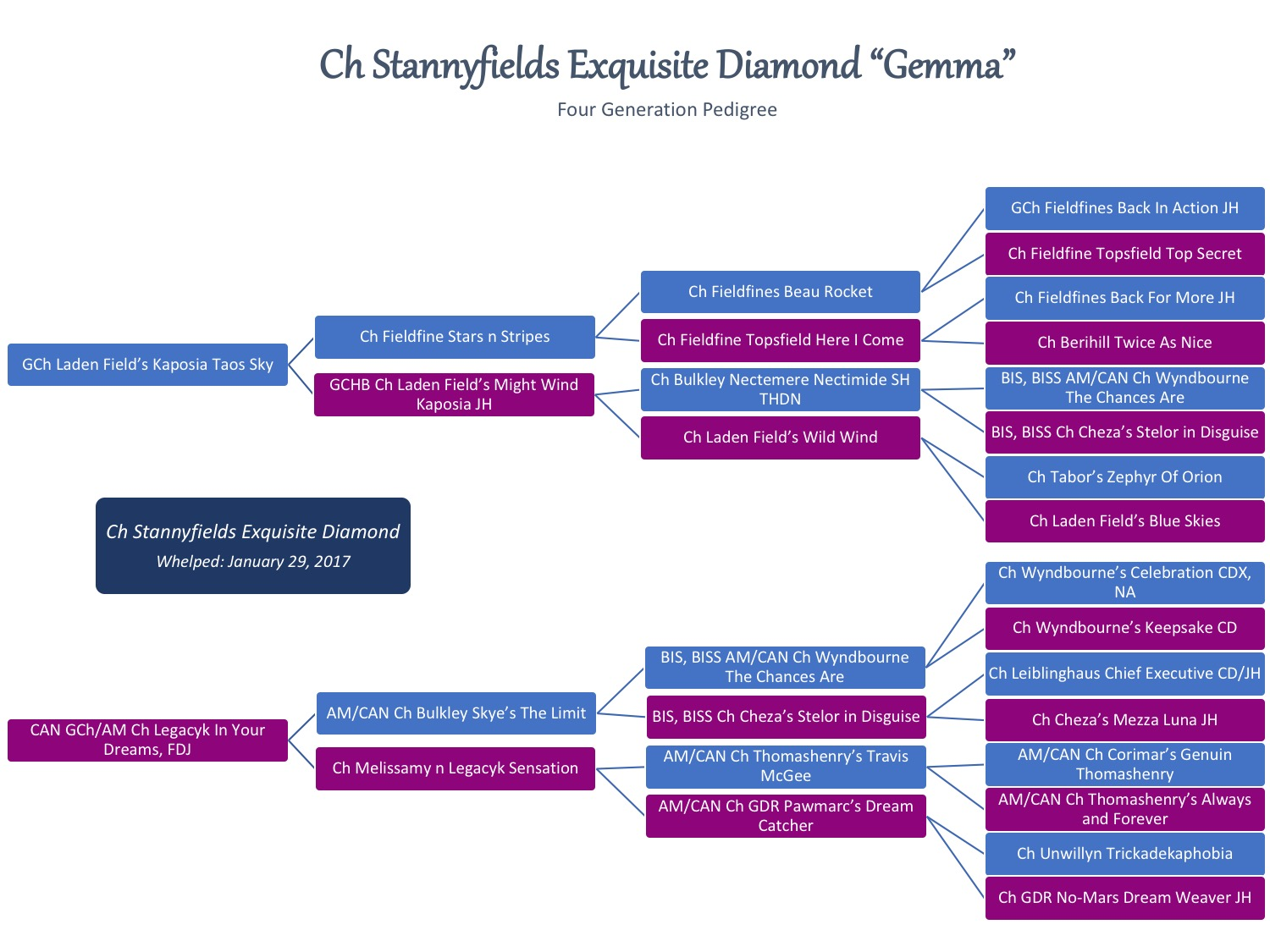 Gemma Pedigree.jpg