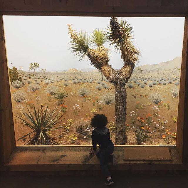 Diorama life . : : #museum #art #pastel #nature #science #learning #southwest #nephew #exploring #milwaukee #hunting