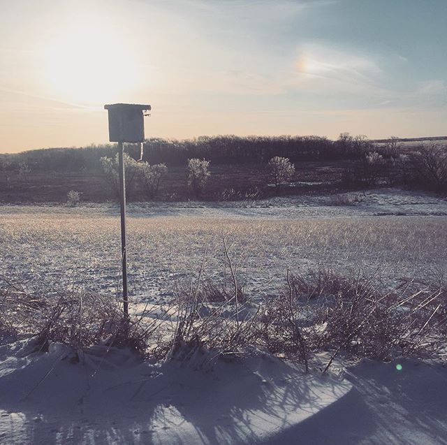 Soft winter sunset. #pastel : : #marsh #bog #rural #wisconsin #beauty #wildlife #national #refuge #birdhouse #silence #peace #nature #science #reset #rejuvenation #relaxation #meditation