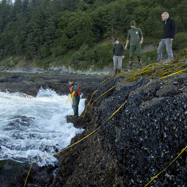 Steve Fradkin, coastal ecologist, examines mussel communities in the intertidal zone.