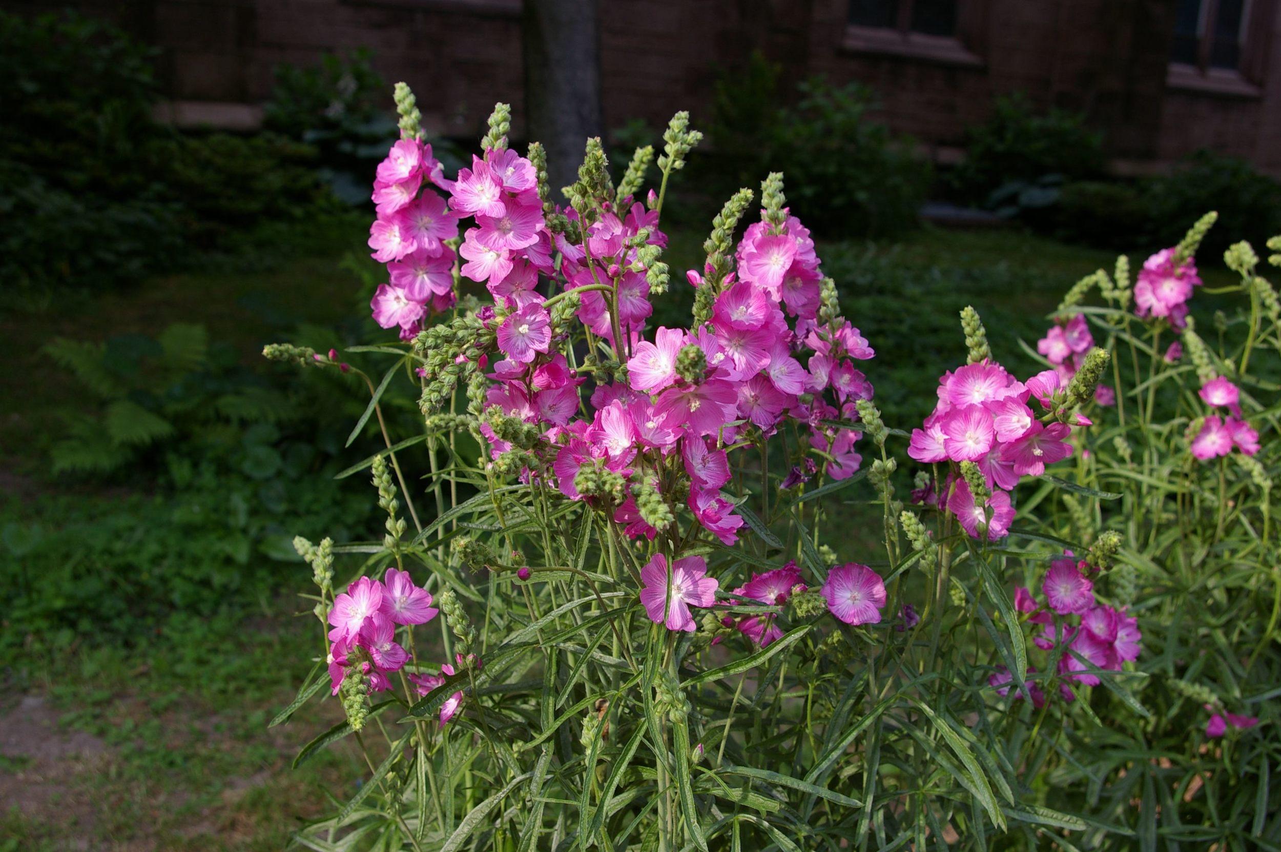 A fine floral ensemble