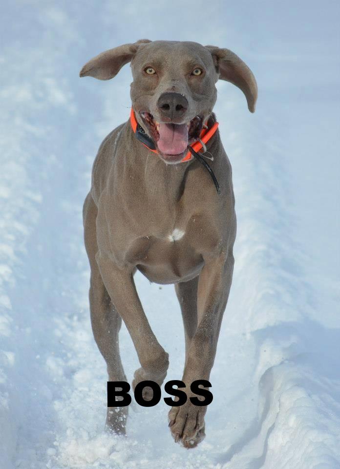 boss 1.jpg