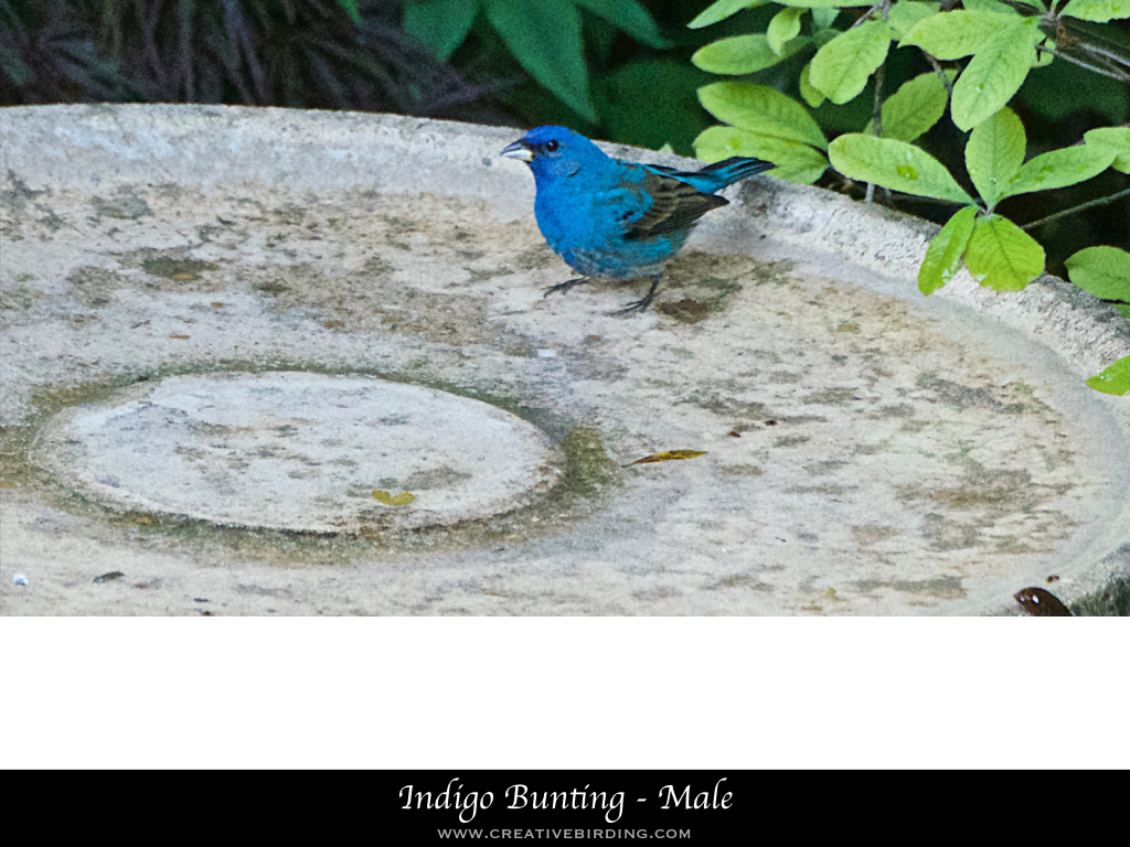 Keynote website photo template.004.jpeg