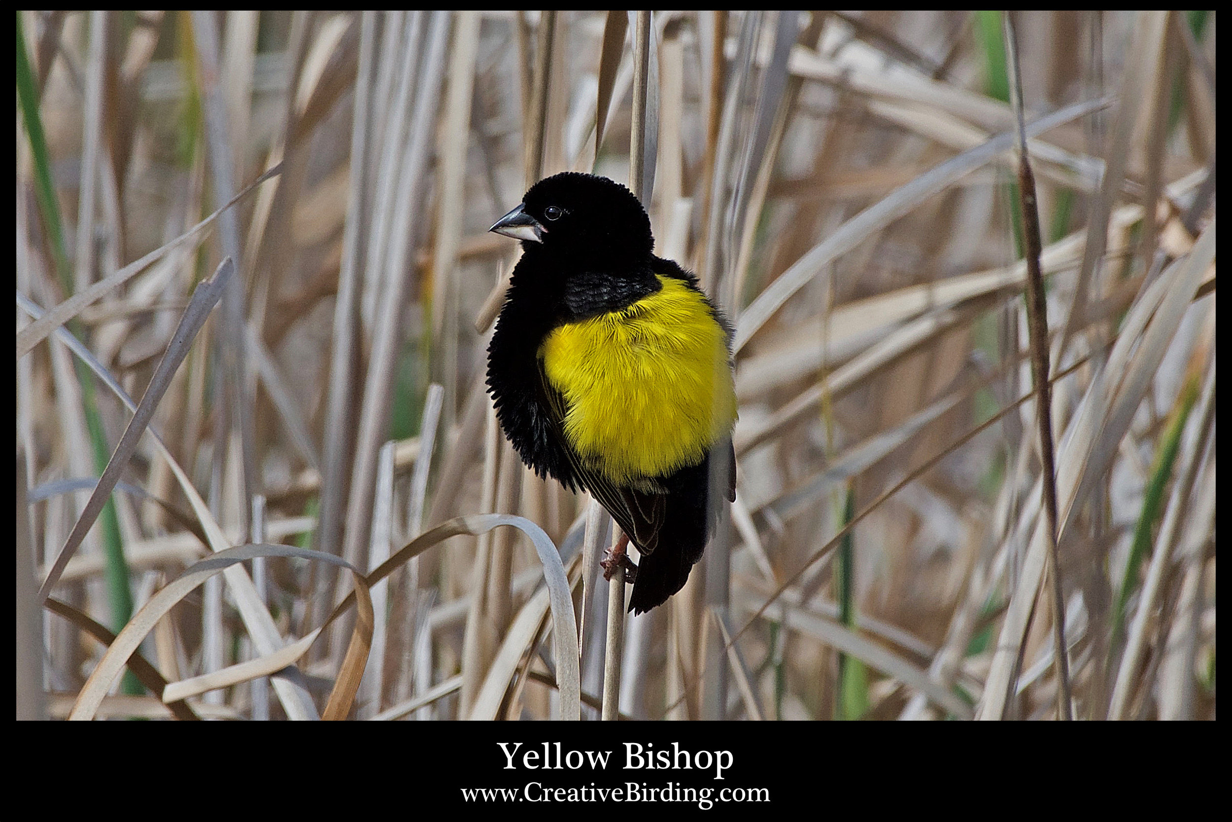 Yellow Bishop.jpg