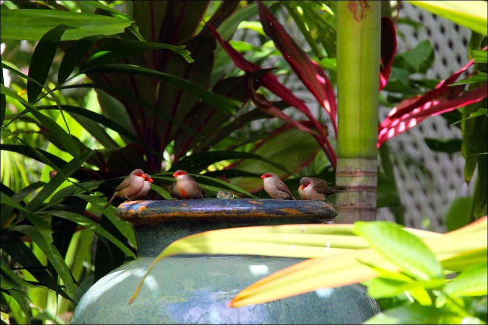 Birds-Bungalow.JPG