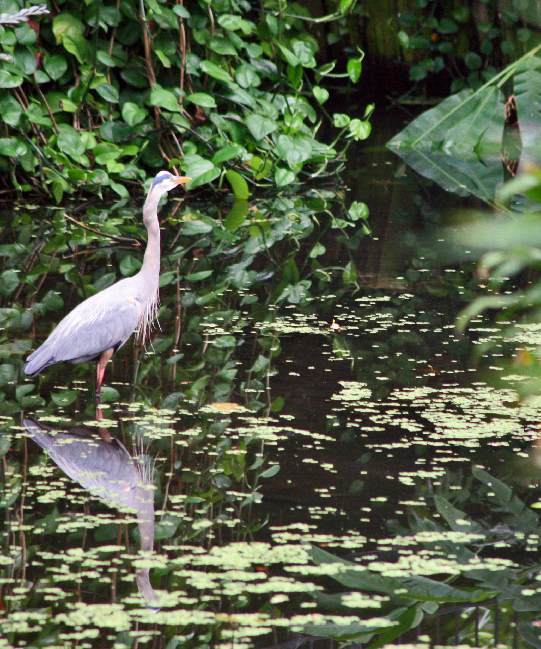 Birds 18.jpg