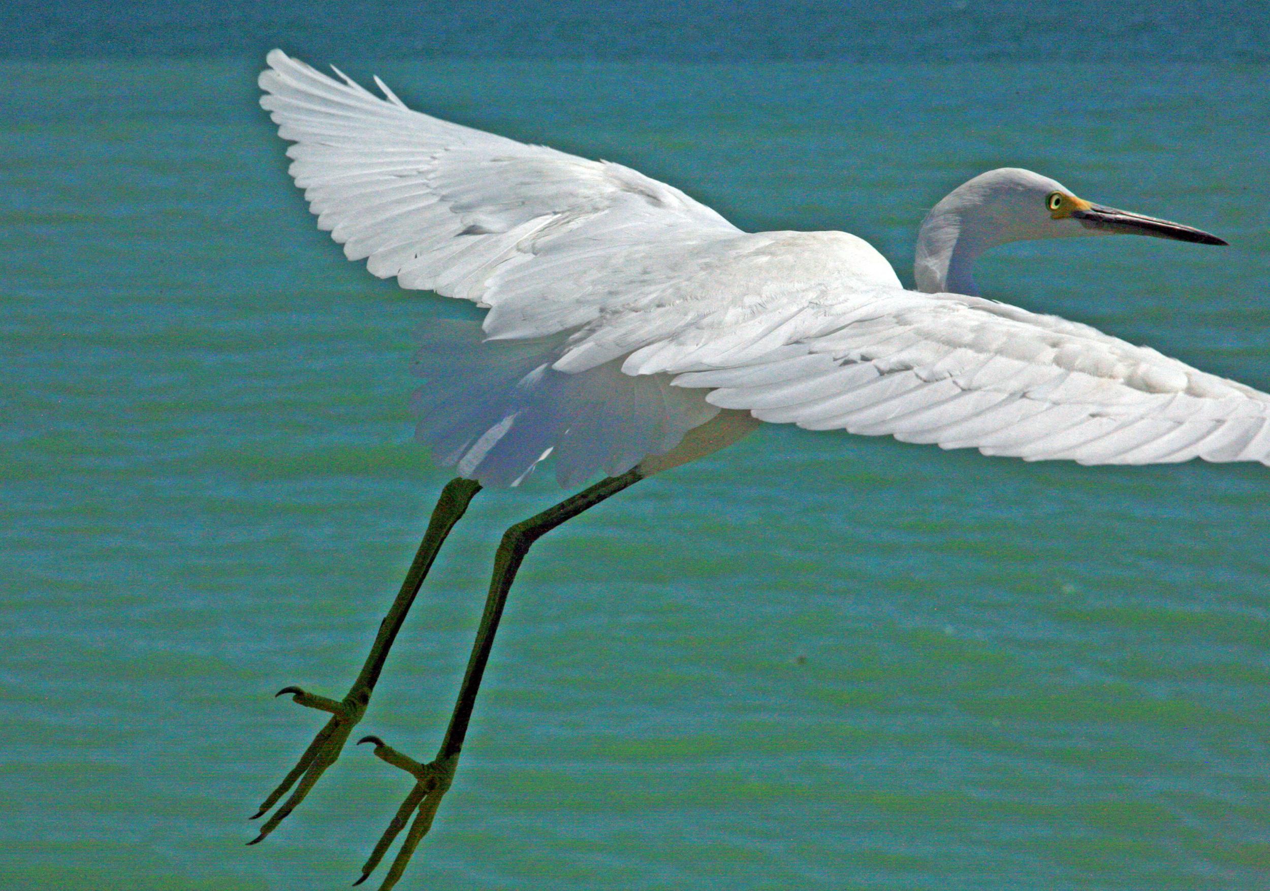 Birds 26.jpg