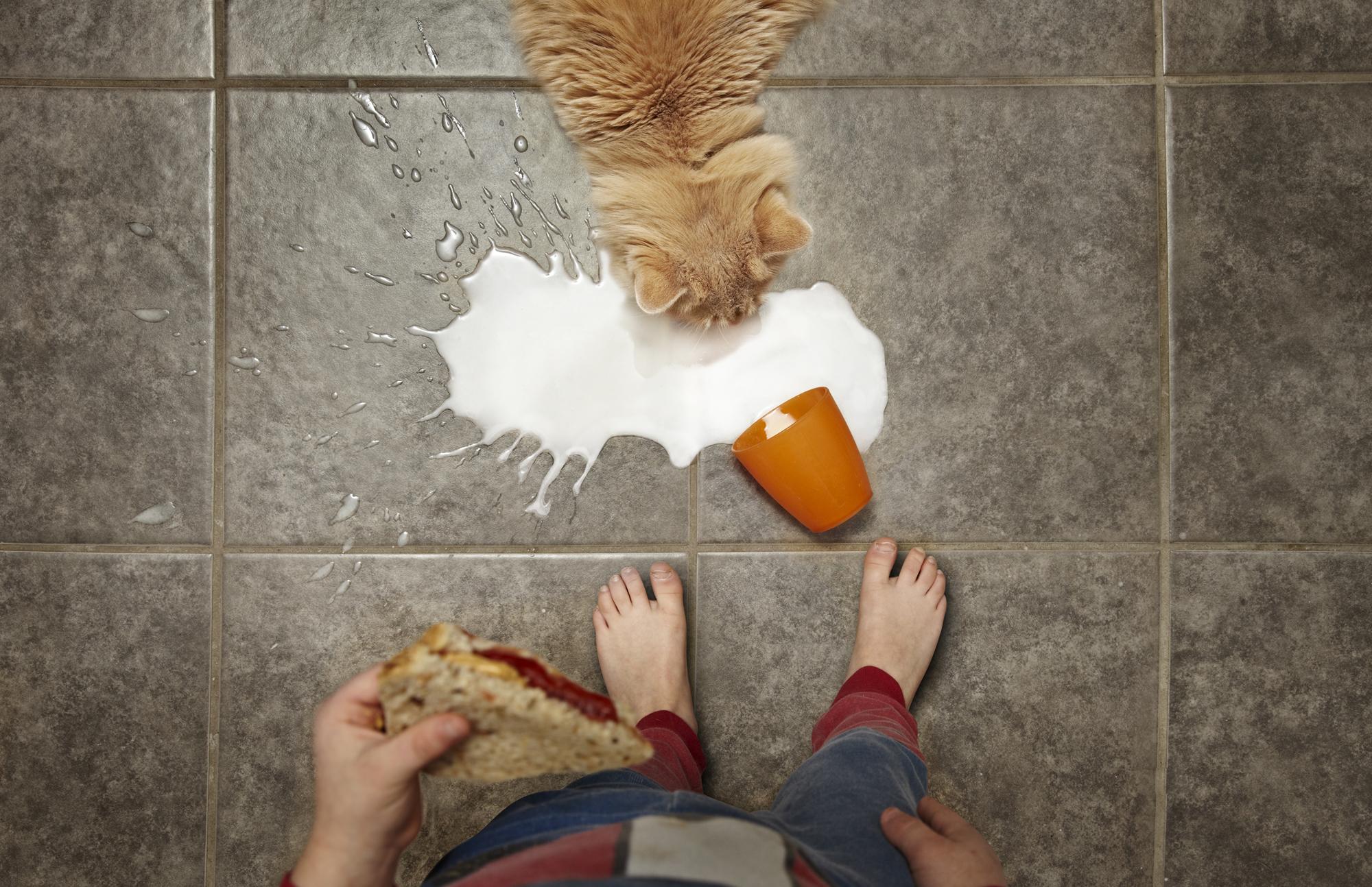 cat with milk.jpg