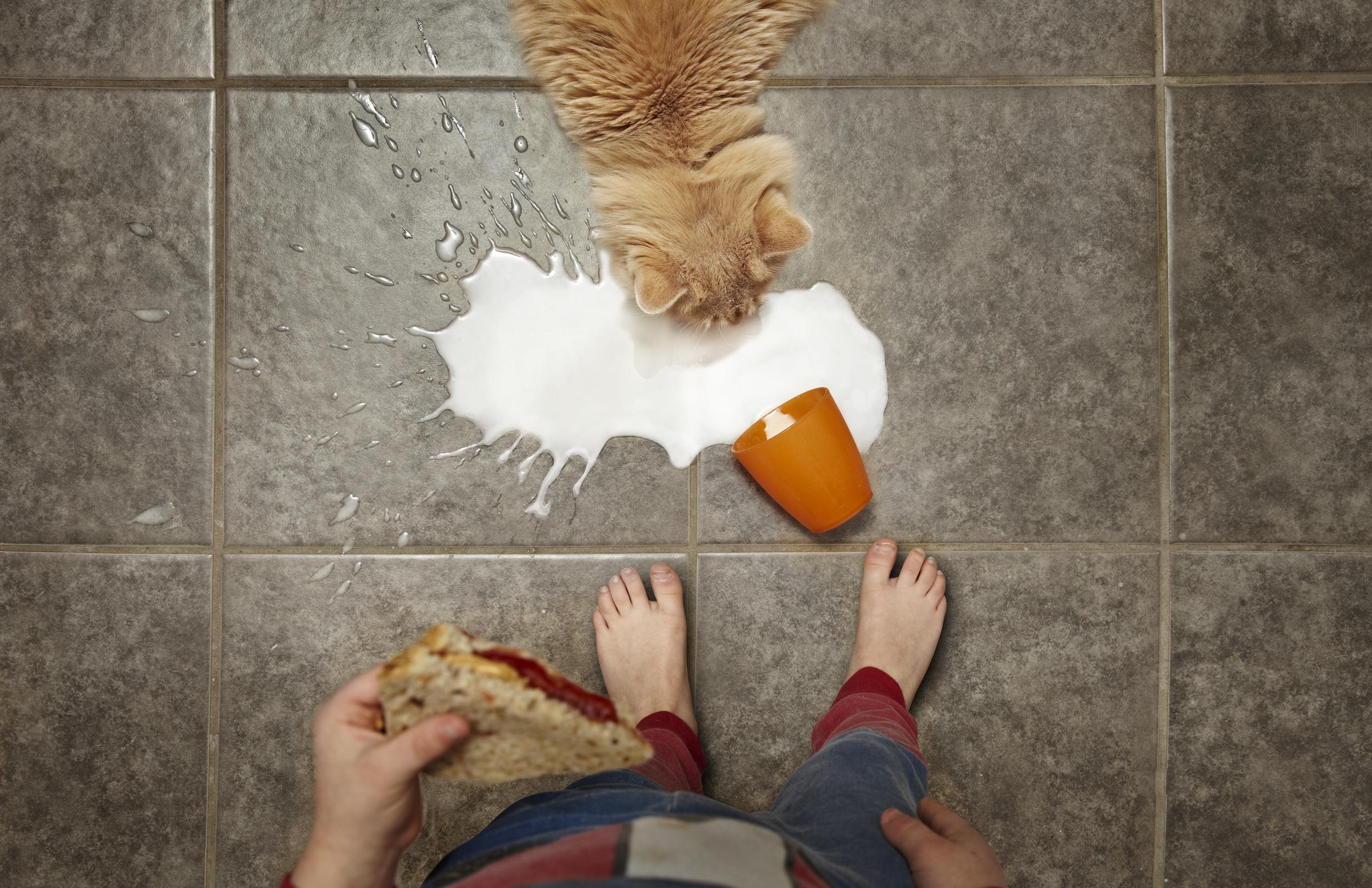cat with milk 2.jpg