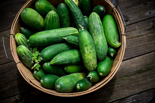 Fresh cucumbers from the Tarc farmers market in Houma, La.