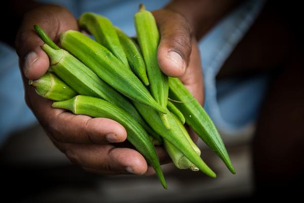 Beautiful okra from the Tarc farmers market in Houma, La.