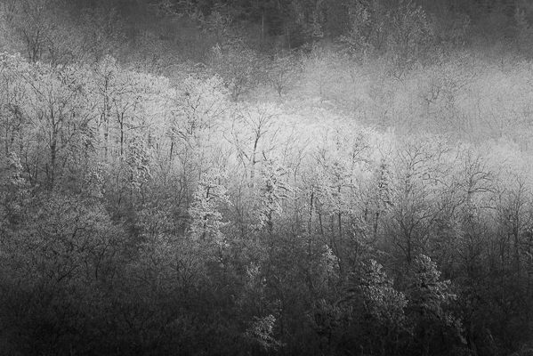 Frost on the trees.