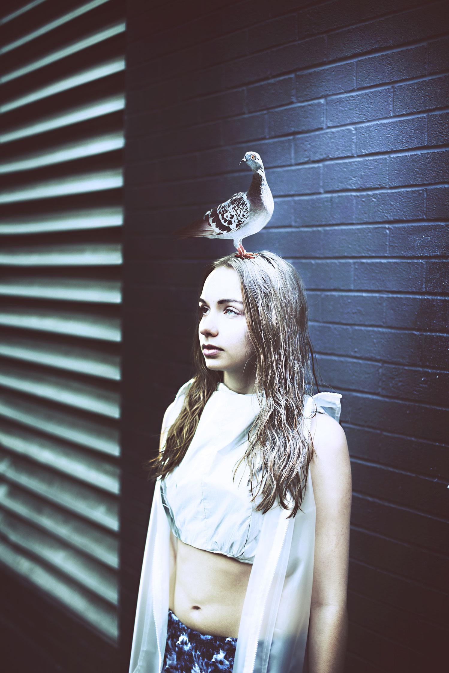 pigeon-head-copy-2.jpg