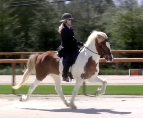 Kathy and Vafi at the USIHC show in Santa Ynez, spring 2013. (A Finals in V1 - Open Individual Four Gait)