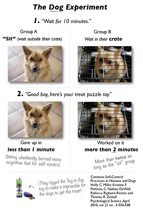 DogExperimentWebVersion.jpg