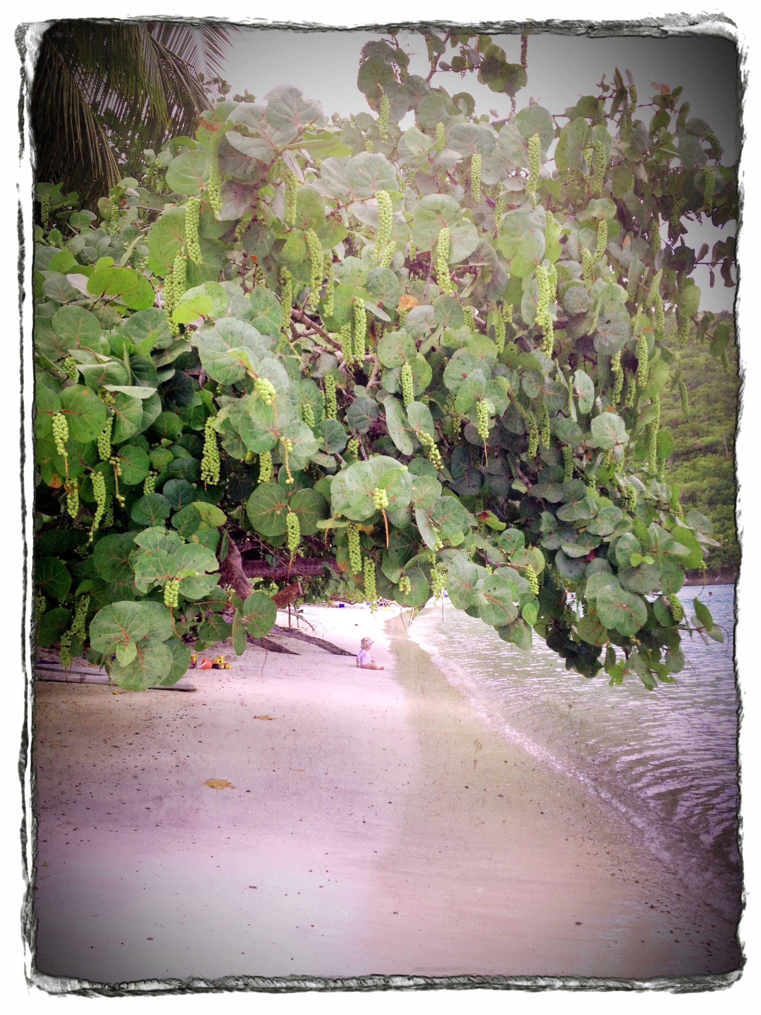 tashi under the magic tree