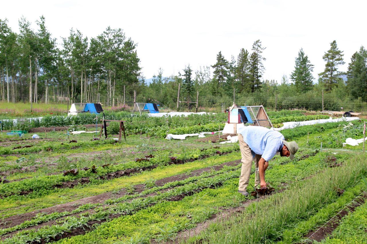 Elemental-Farms15.jpg