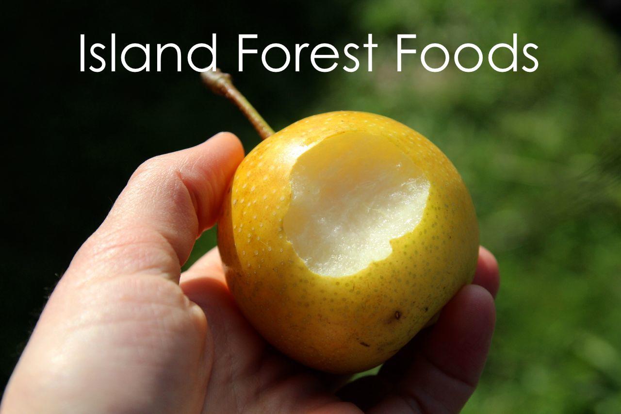 islandforestfoods2 copy.jpg