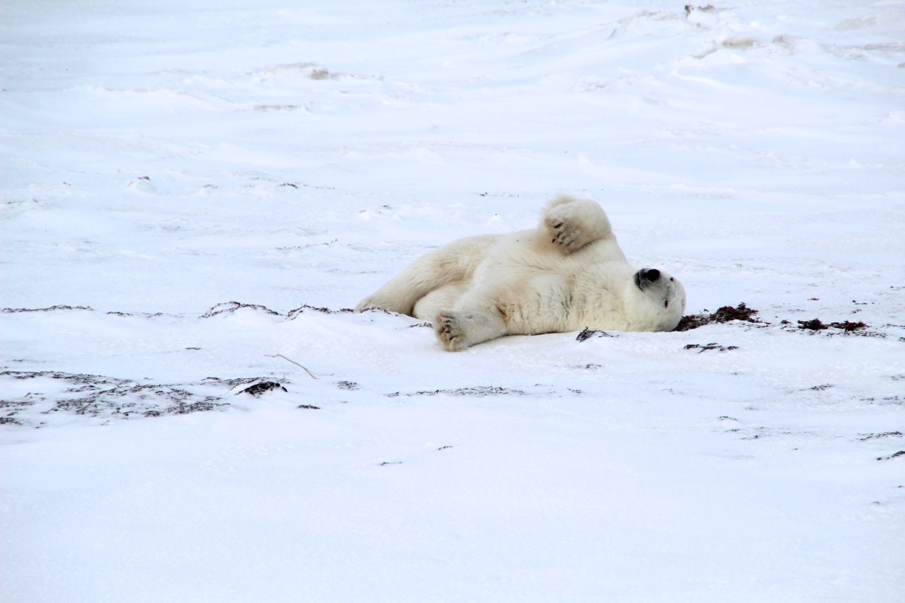 bearsbears2.jpg