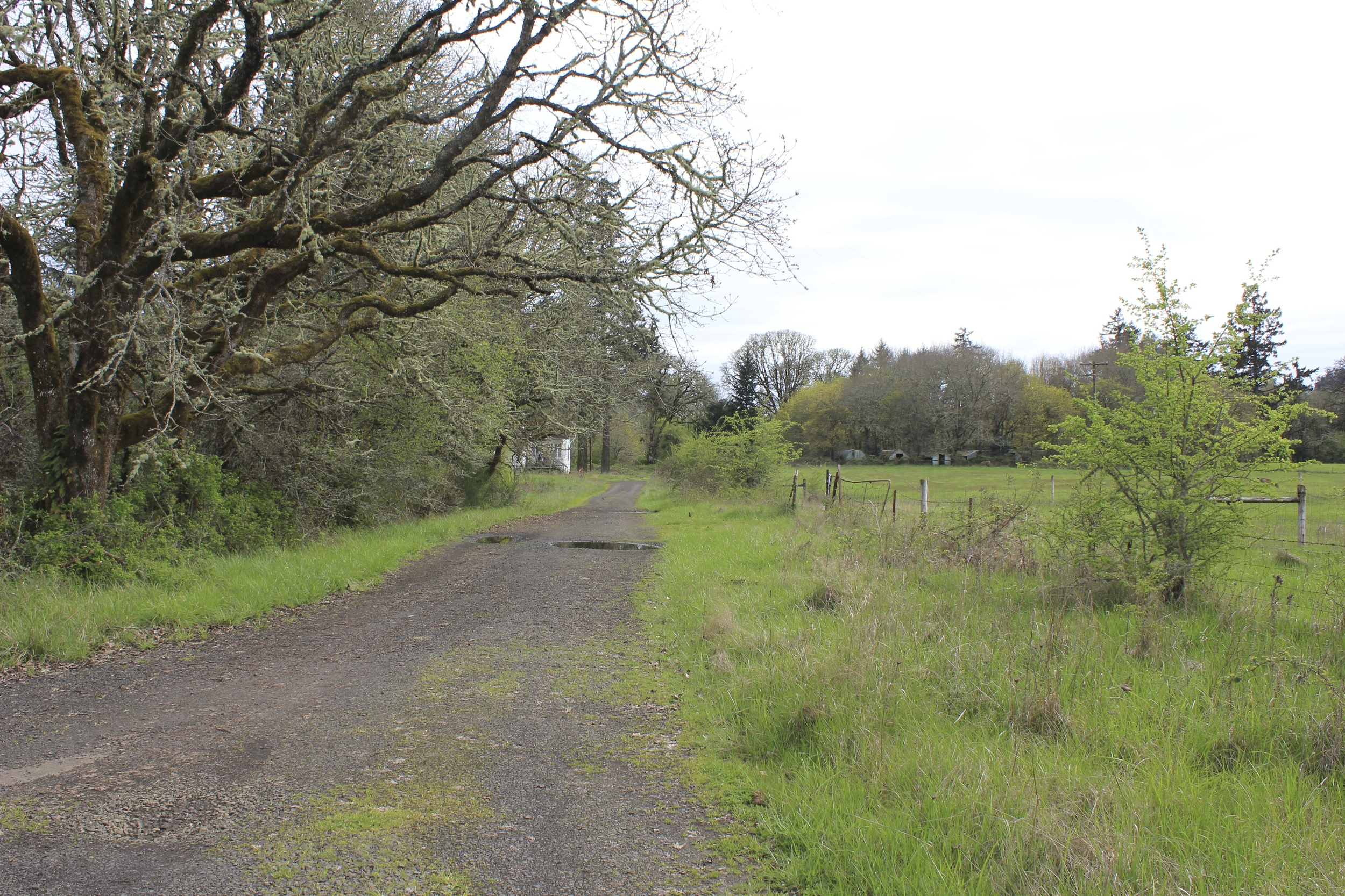 """South Farm"" near the Oregon State University campus. Corvalis, OR"