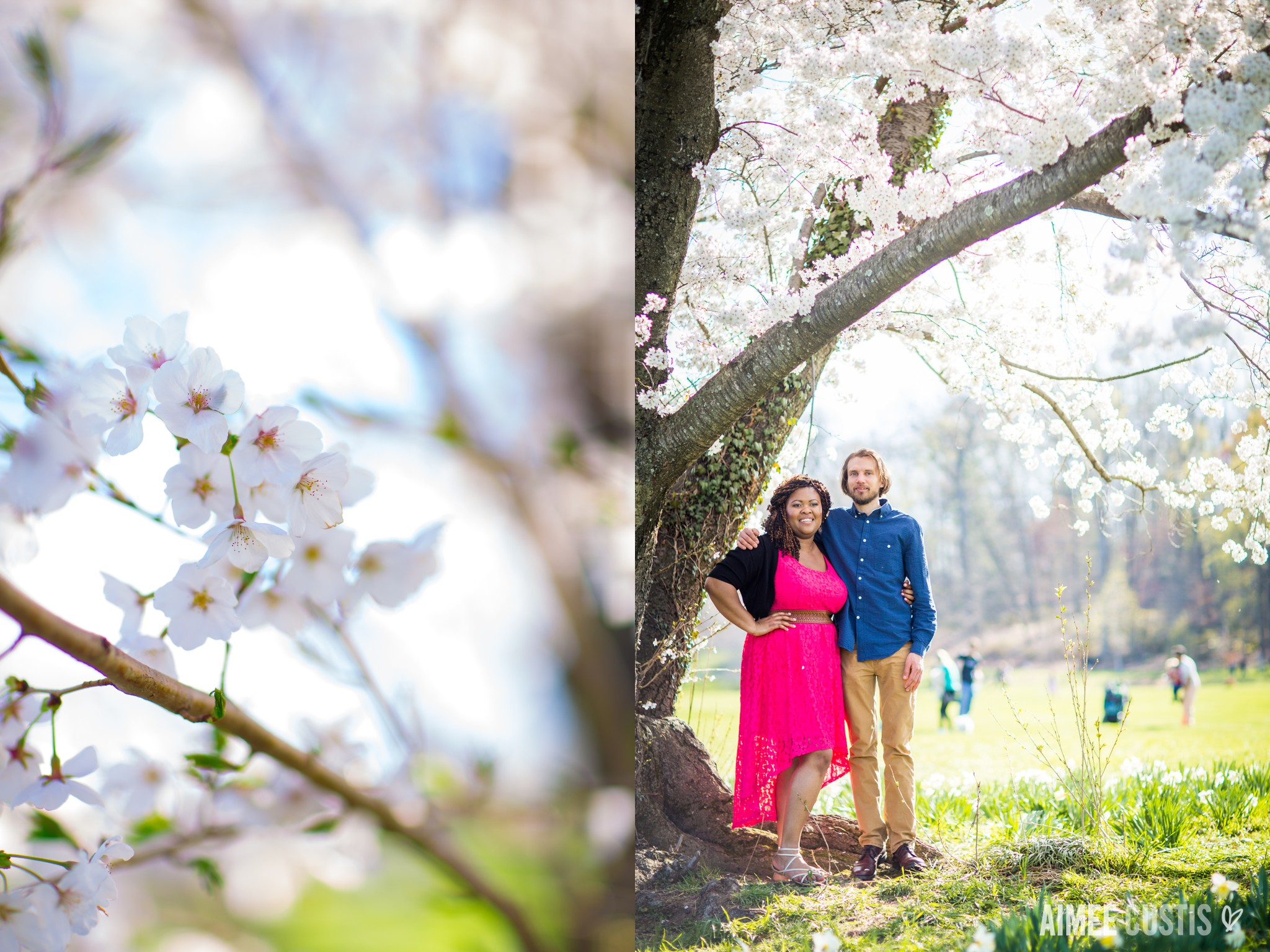 cherry blossom DC engagement photography