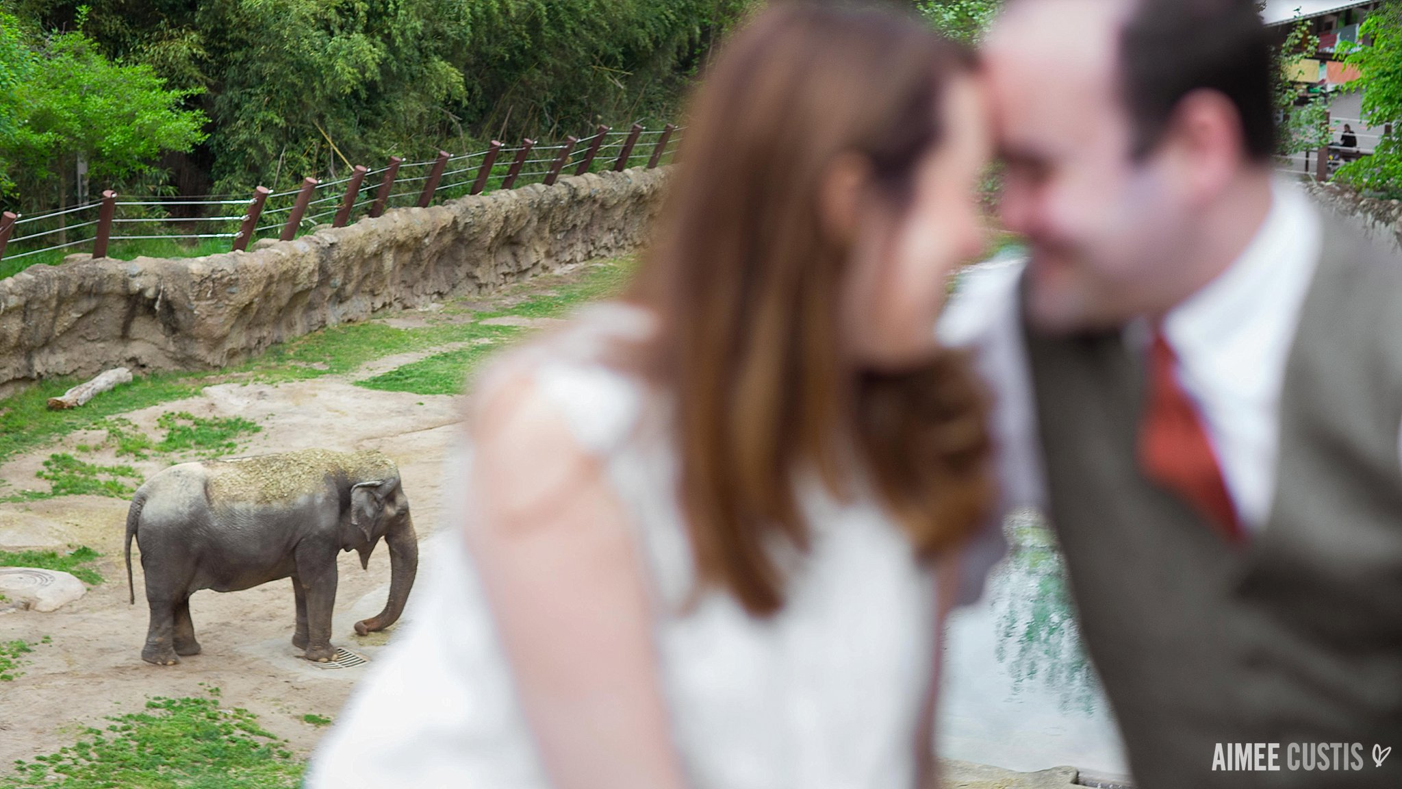 Smithsonian National Zoo engagement photography