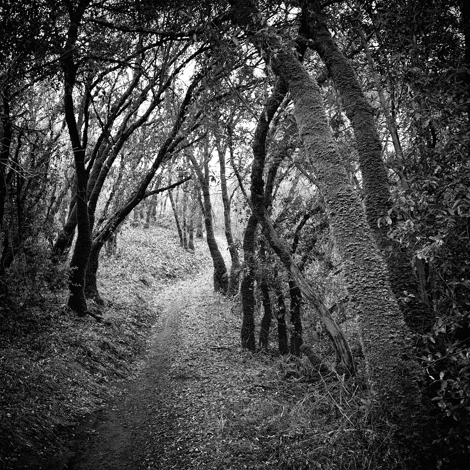Foresthill Divide Trail, Study 3