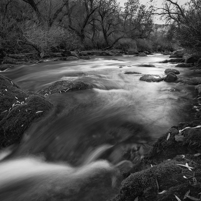 Upper Putah Creek, Study 2, Solano County, California