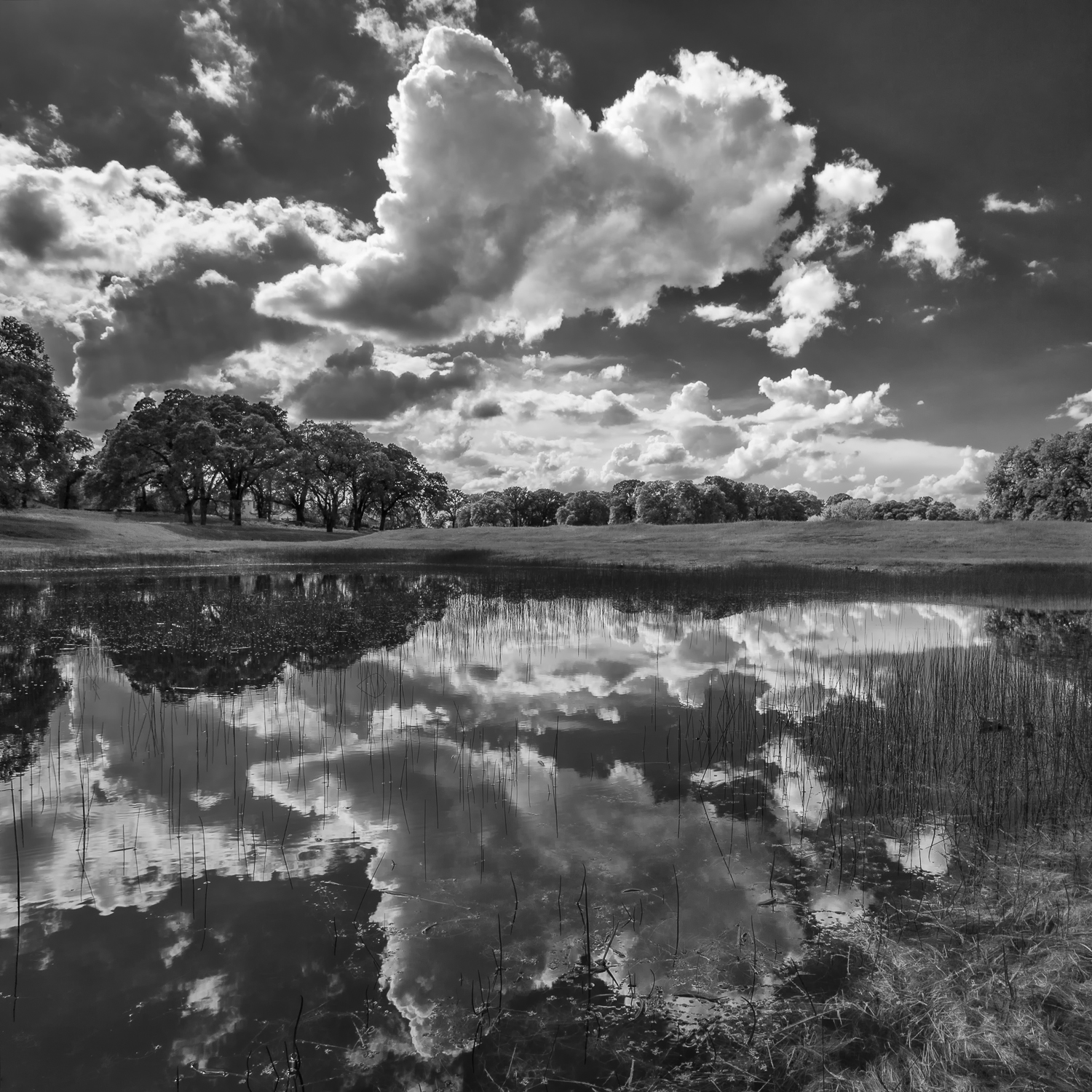 Ephemeral Wetland, Placer County, California
