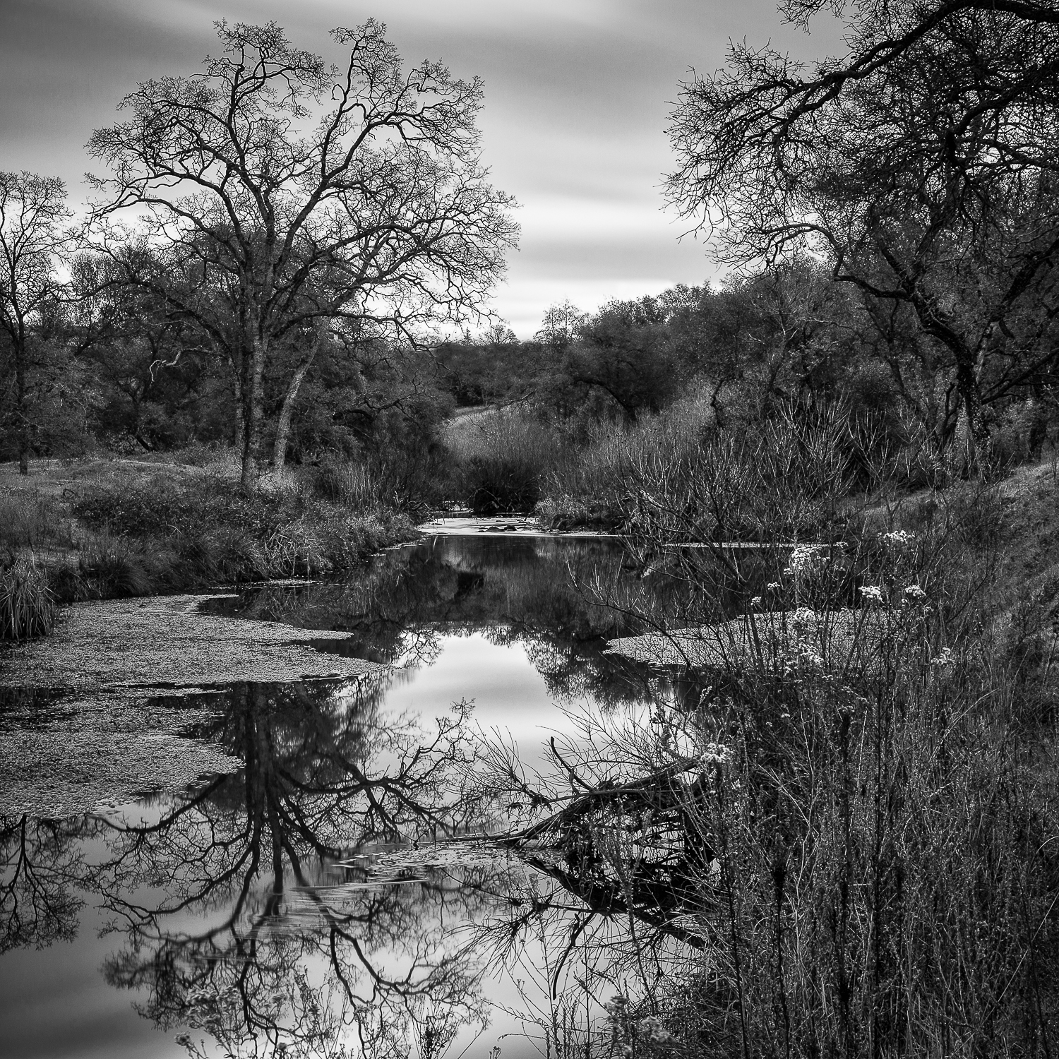 Natural Water Garden, Olympus Pointe, Placer County, California