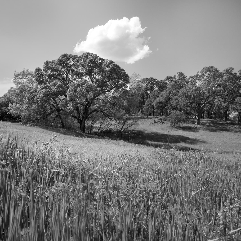 Meadow Near Pleasant Grove Creek