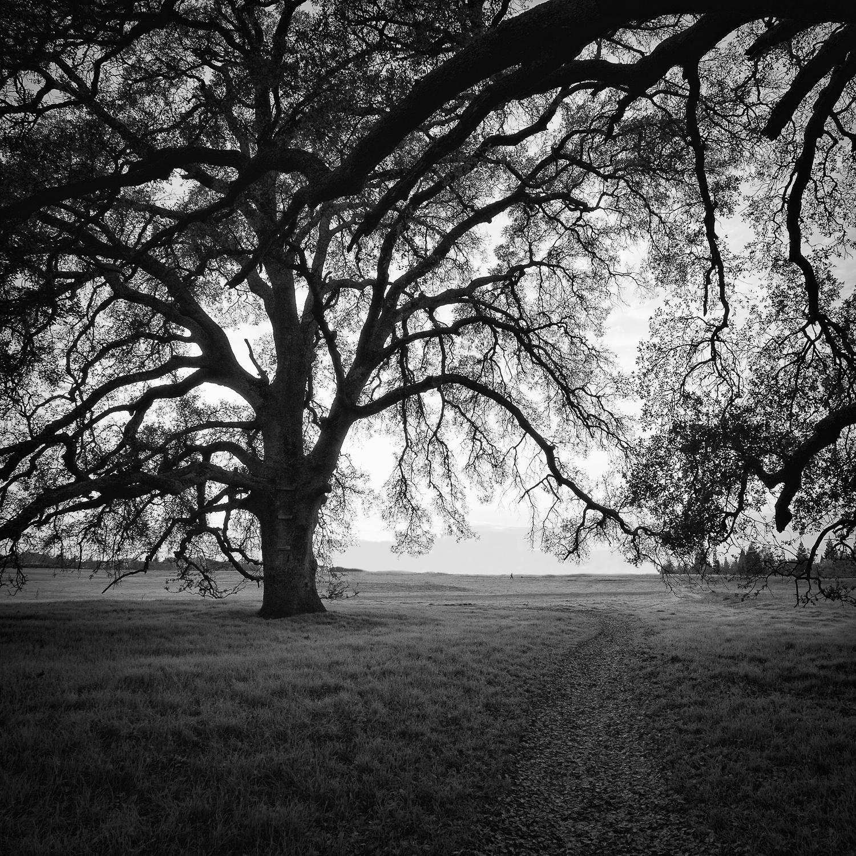 Path Through Oak Woodland, Placer County, California