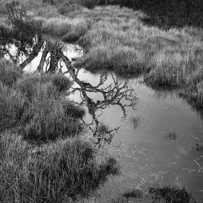 Ephemeral_Wetland_Study_2.jpg